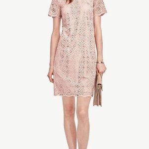 Ann Taylor Mosaic Lace Shift Dress Sz 6